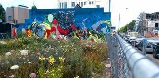 city lot wildflowers
