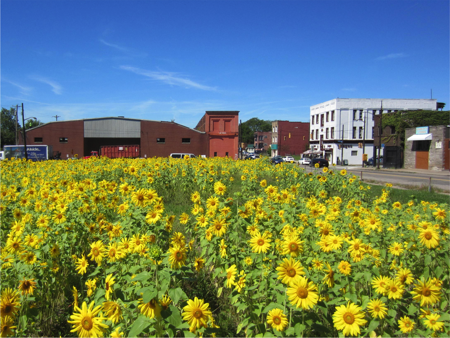 In the neighborhood of Larimer in Pittsburgh, vacant land was transformed into a sunflower garden. The garden yielded the city's first-ever crop of biofuel.