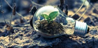 lightbulb as a small terrarium with plant growing inside it